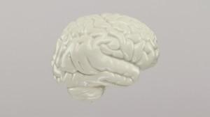 cerveau-profil-4-bc