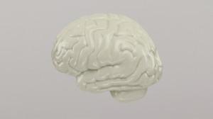 cerveau-profil-6bc